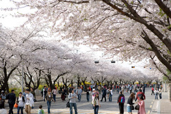 Du khách nên lựa chọn thời gian phù hợp để đi du lịch Hàn Quốc