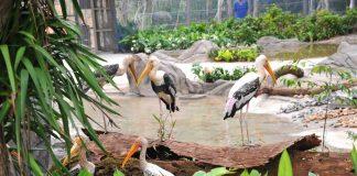Du lịch Phú Quốc - Khám phá công viên chăm sóc và bảo tồn động vật Vinperl